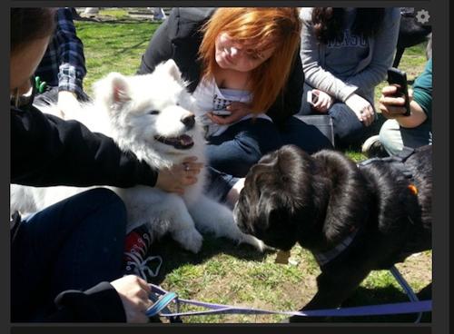 dogtherapy01.jpg