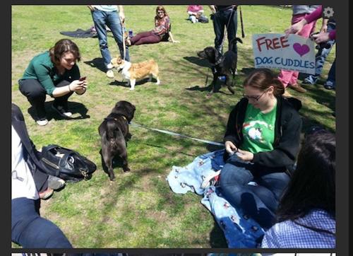 dogtherapy02.jpg
